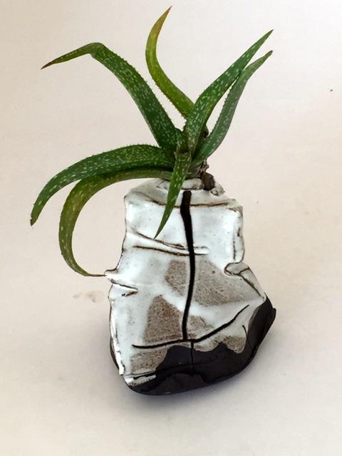 Metamorphic vases by Clementina Ceramics